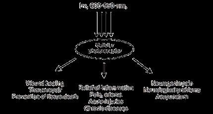 Description: Fig1