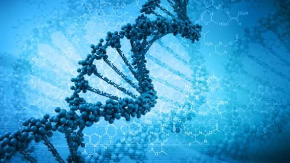 http://a57.foxnews.com/global.fncstatic.com/static/managed/img/Health/660/371/DNA%20genes.jpg?ve=1