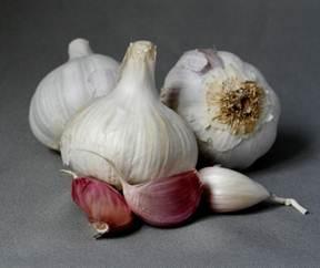 Descrição: C:UsersClaudiaPicturesfresh garlic4.jpg