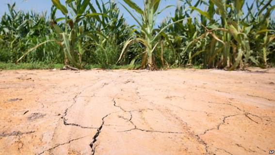 Descrição: The ground is cracked at the edge of a corn field near England, Arkansas, where oppressive heat is affecting the crop.