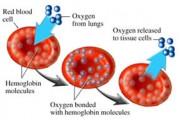 hemaglobin