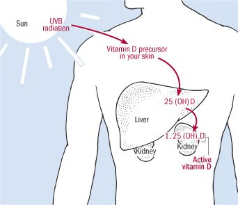 How the body makes vitamin D