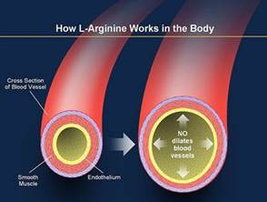 Descrição: PowerPoint: How L-Arginine Works in the Body