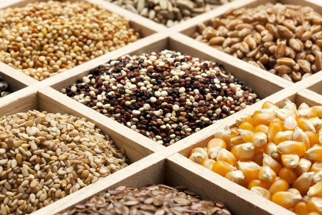 seed nutrition