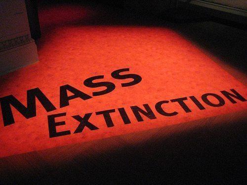 http://www.treehugger.com/Mass-Extinction.jpg