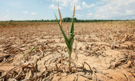 Descrição: http://media.theweek.com/img/dir_0080/40364_article_full/a-corn-plant-struggles-to-survive-in-a-drought-stricken-illinois-field-38-percent-of-us-corn-crops.jpg?104